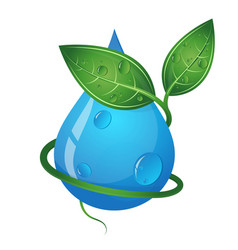 drop of water and green leaves eco symbol vector image