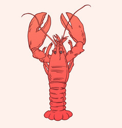 American lobster for artwork vector