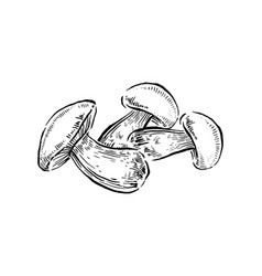 bolete mushrooms hand drawn vintage vector image