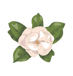 hand drawn magnolia branch vector image
