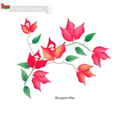 Red Bougainvillea Flowers Native Flower of Oman vector image