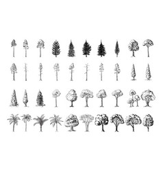 Silhoutte of trees on a white background vector