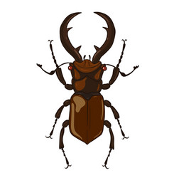 stag-beetle isolate on white background graphics vector image