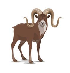 Screw horned markhor goat wild animal vector