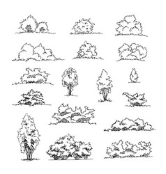 Set of hand drawn architect shrubs sketch vector