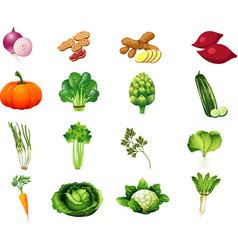 Vegetables set2 vector