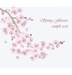 Vintage Cherry flowers background vector
