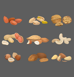 icons set with various kinds of nuts walnut vector image