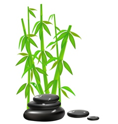zen stones with bamboo vector image vector image