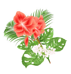 Beautiful amaryllis red tropical flower vector