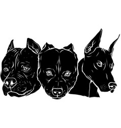 Black silhouette heads dogs pitbull vector
