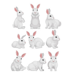 flat set of white rabbit in different poses vector image