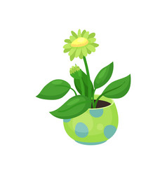 blooming flower in a pot vector image