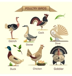 Farm birds set in flat style design vector image