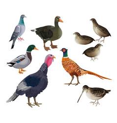 game birds set vector image