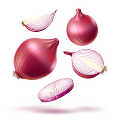 realistic red onion whole bulb slices mix vector image