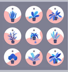 Set of tags for houseplants in flat style vector
