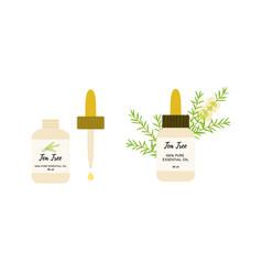 Tea tree essential oil in glass bottles eye vector