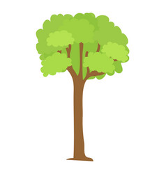 tree icon with green leaves and brown trunk vector image