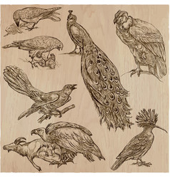 Birds - an hand drawn pack line art vector