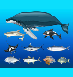 different types of sea animals vector image