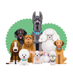 dogs different breeds together vector image