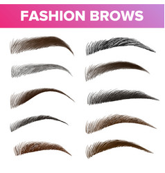 fashion brows various shapes and types set vector image