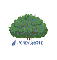 Honeysuckle garden berry bush with name vector