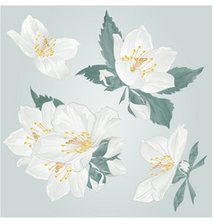 Jasmine flowers and buds twigs set vector