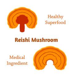 Reishi mushroom ganoderma lucidum vector
