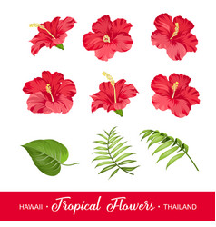 Set tropical flowers elements vector