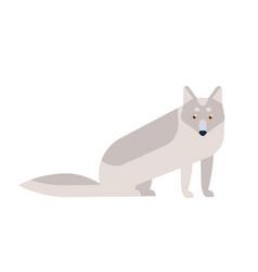 Arctic fox flat adorable vector
