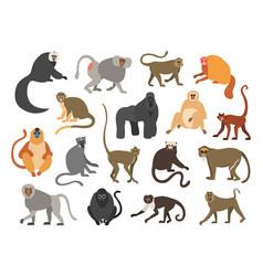 Cartoon primates chimpanzee and gorilla monkeys vector