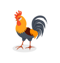 colorful rooster poultry farming vector image
