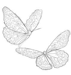 contour drawing two butterflies vector image