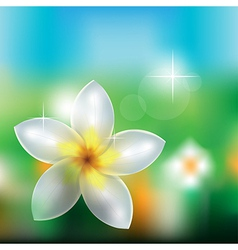 Flowers in nature vector image