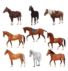 Horses in various poses vector