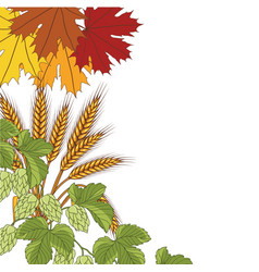 Leaves wheat hops background vector