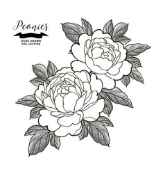 Peony flowers and leaves in japanese tattoo style vector
