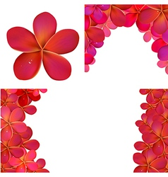 Pink Frangipani Set For Design vector