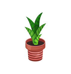 Sansevieria green houseplant potted plant vector