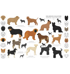 Working service and watching dogs collection vector