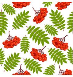 beautiful seamless pattern with rowan vector image vector image