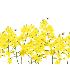 Seamless rape seed border flower vector
