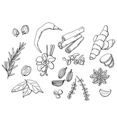 set spices organic and fresh spices vector image