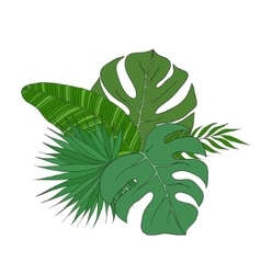 Set of leaves different species palm trees vector image