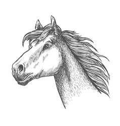 Galloping horse andalusian breed sketch symbol vector