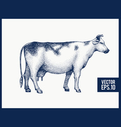 Graphical cow silhouette hand drawn cow vector