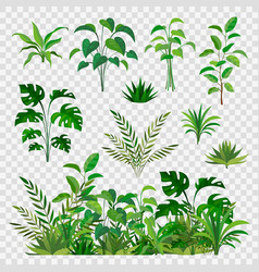 Green herbal elements decorative beauty nature vector