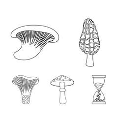 morel oyster green amanita actarius indigo vector image